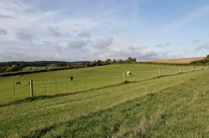 Marchmont Fields
