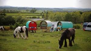Romany horses
